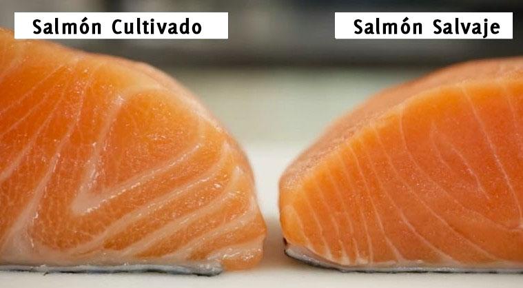 salmon-cultivado