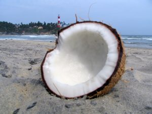 coconut-beach-1327595