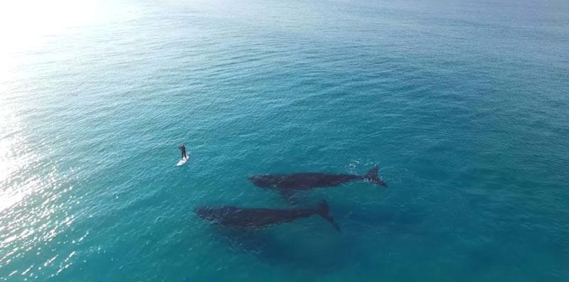 ballenasgrabadas