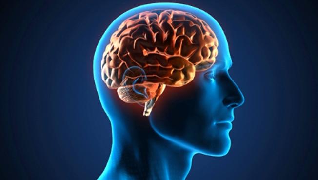 cerebroi