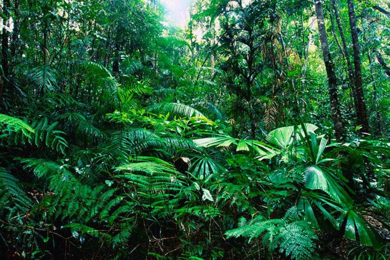 Selva Tropical 35 Cosas Importantes Que Debes Conocer Mente y