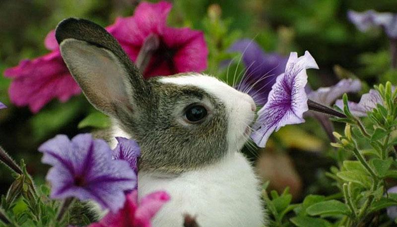 ¿Cuántos años viven los conejos?