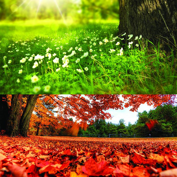 Bosques Caducifolios: Localización, Temperatura, Lluvia, Flora Y ...