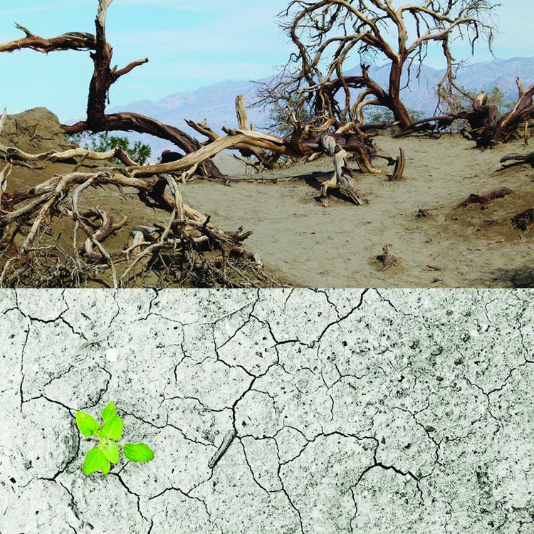 Degradaci n del suelo causas consecuncias y soluciones for Suelo organico para dibujar