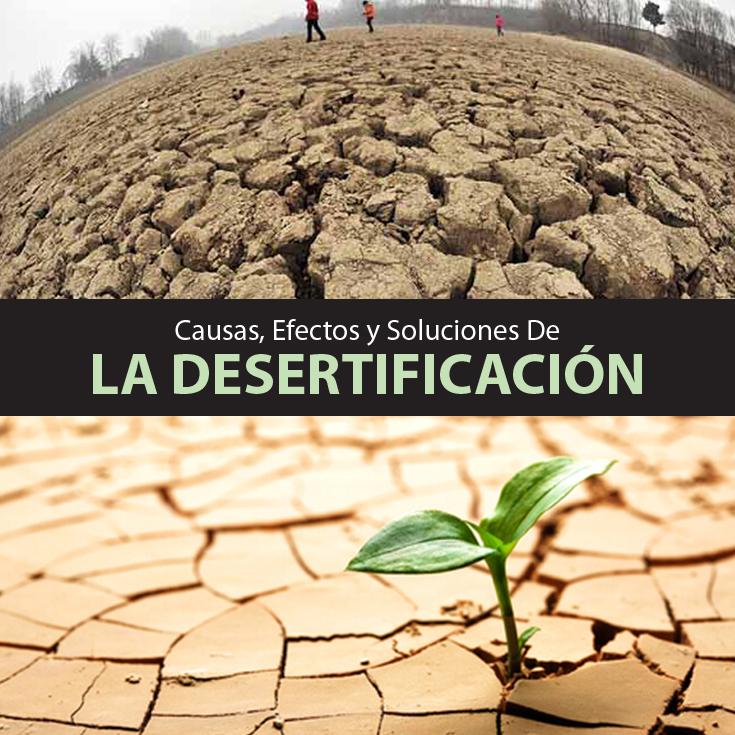 Desertificación: Qué Es, Causas, Efectos Y Soluciones ...
