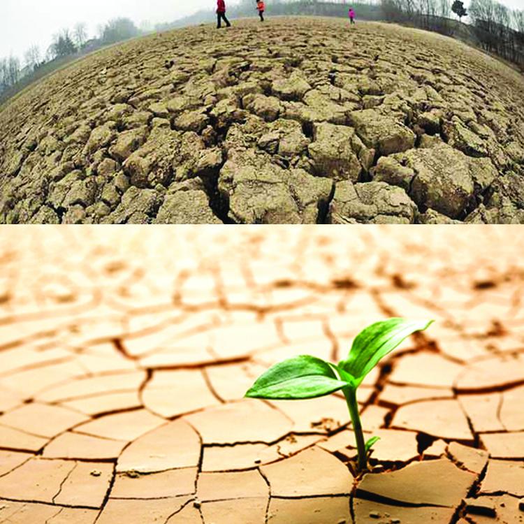 Desertificaci n qu es causas efectos y soluciones for A que se denomina suelo